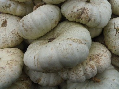 white pumpkins gourds