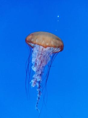 toronto aquarium jellyfish