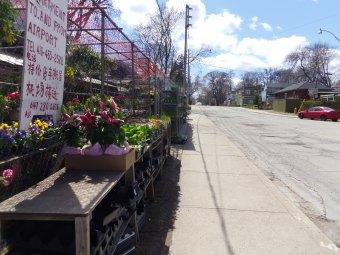 florist toronto