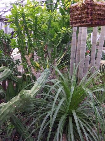 allan gardens cacti toronto
