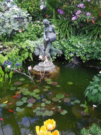 allan gardens fishpond fountain goldfish