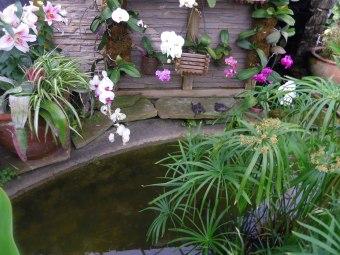 turtles at allan gardens toronto