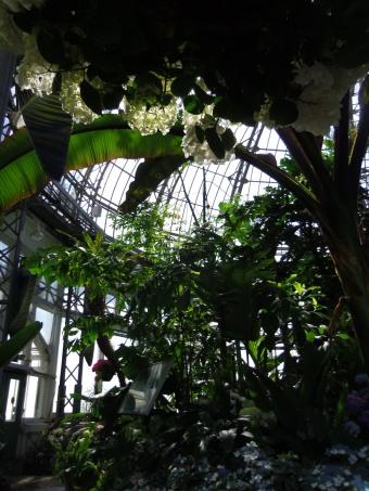 allan gardens toronto palm