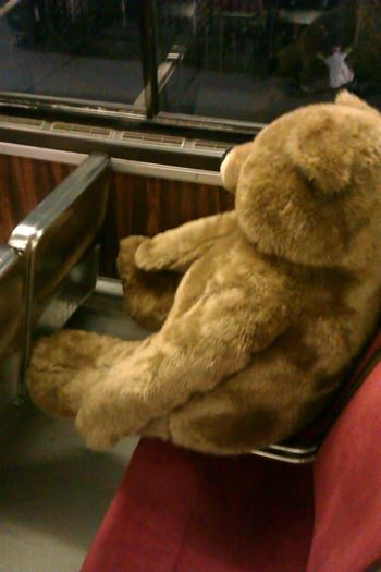 giant teddy bear on transit