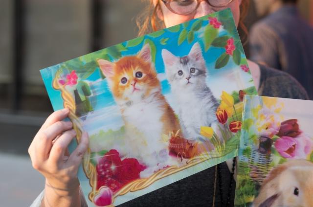 3d kittens