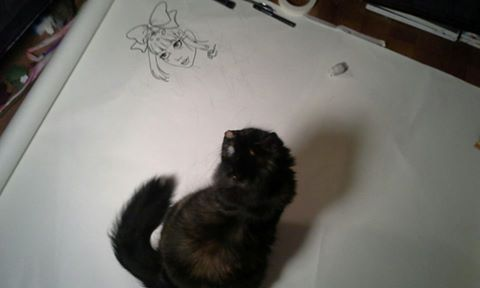 cat watching drawing