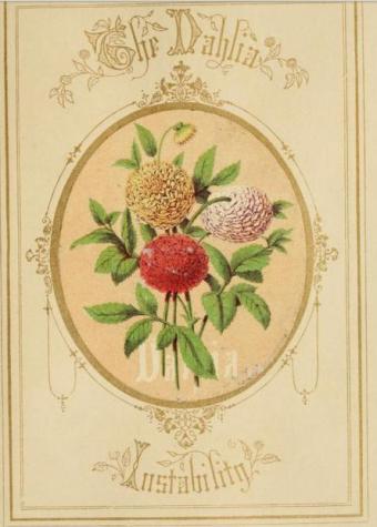 victorian language of flowers dahlia