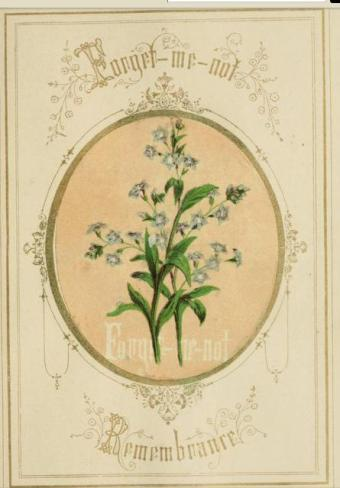 victorian language of flowers forgetmenot
