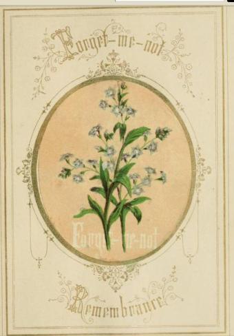 victorian language of flowers forgetmenot