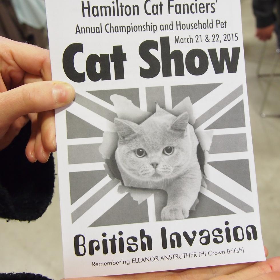 hamilton cat fanciers cat show british invasion