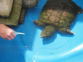 toronto wildlife centre open house 2015