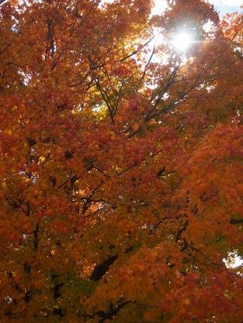 autumn ontario canada