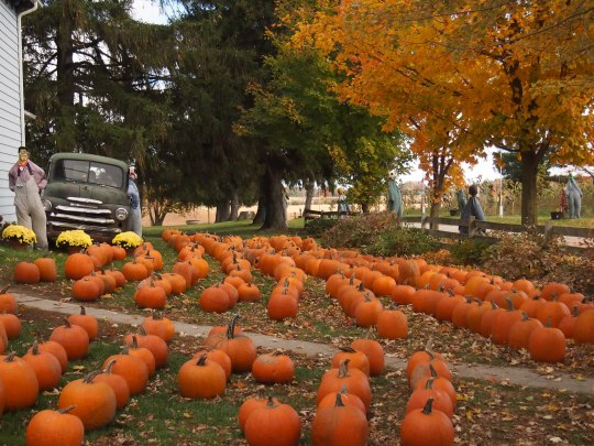 pumpkin picking ontario