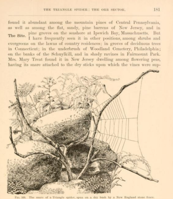 american spiders and their spinning work