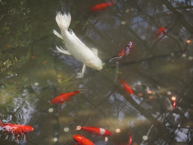 allan gardens toronto fish