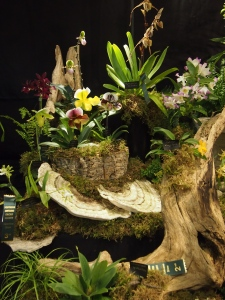 toronto orchid show 2016