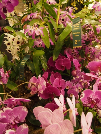 toronto orchid show display 2016