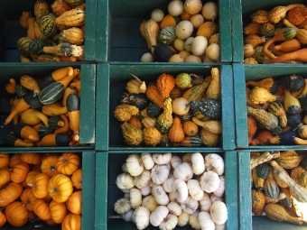 assorted novelty gourds