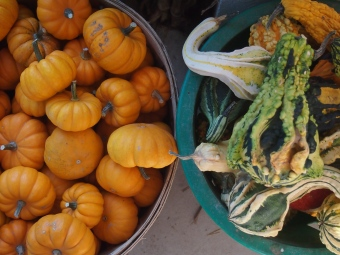 gourds and tiny pumpkins