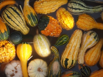 wet gourds