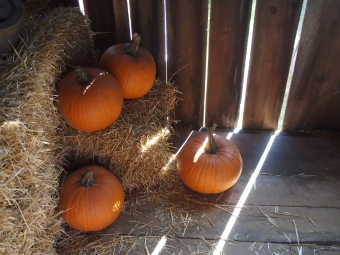 pumpkins in barn light