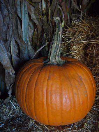 gothic pumpkin