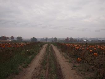 autumn road farm country ontario
