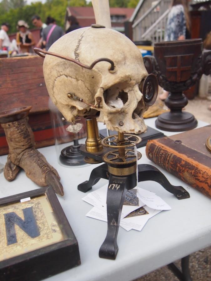 victorian skull taxidermy cabinet of curiousities cabinet of curiousities dundas ontario aberfoyle antique market ontario