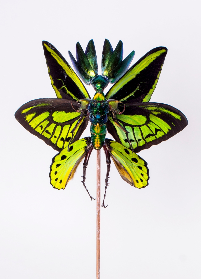 Cedric Laquieze insect fairy art
