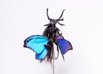 Cedric Laquieze fairy sculpture insect (1)